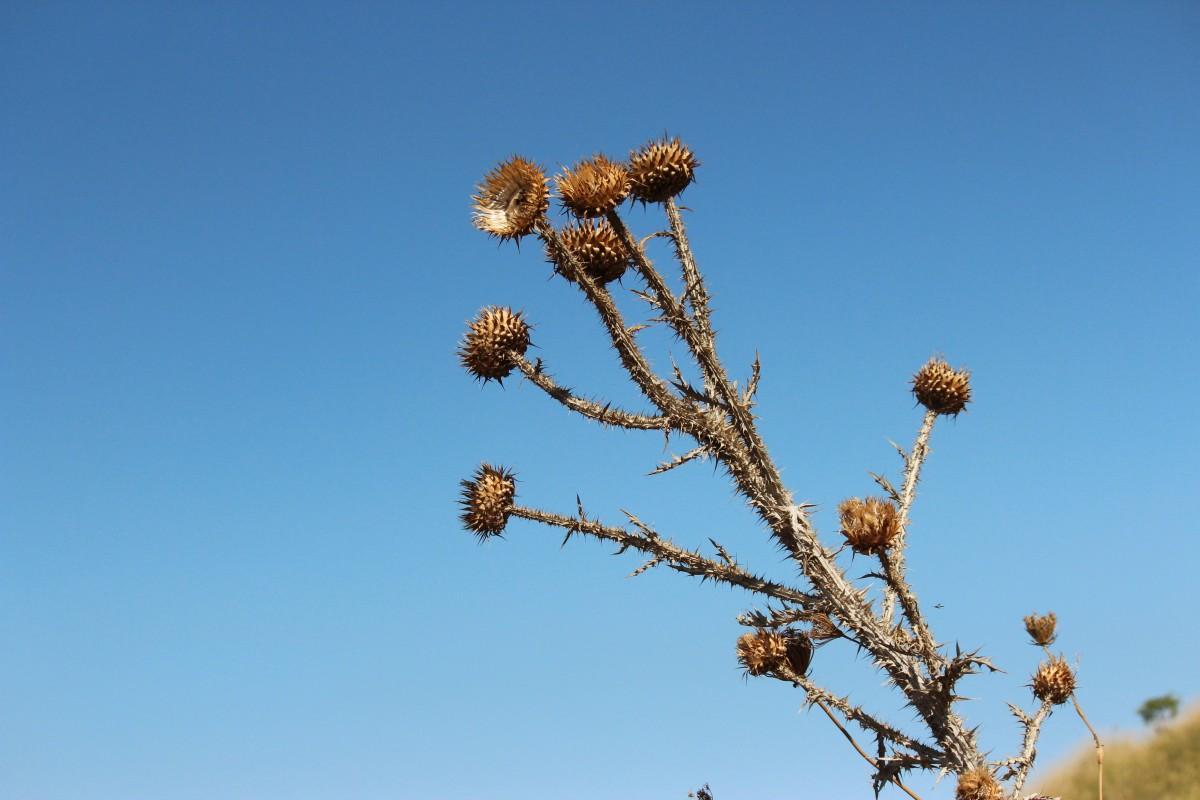 Kostenlose foto : Baum, Natur, Ast, blühen, Berg, Himmel, Blatt ...