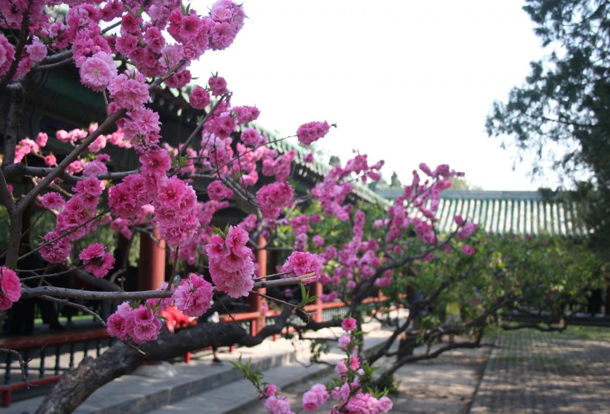 растительный мир китая картинки