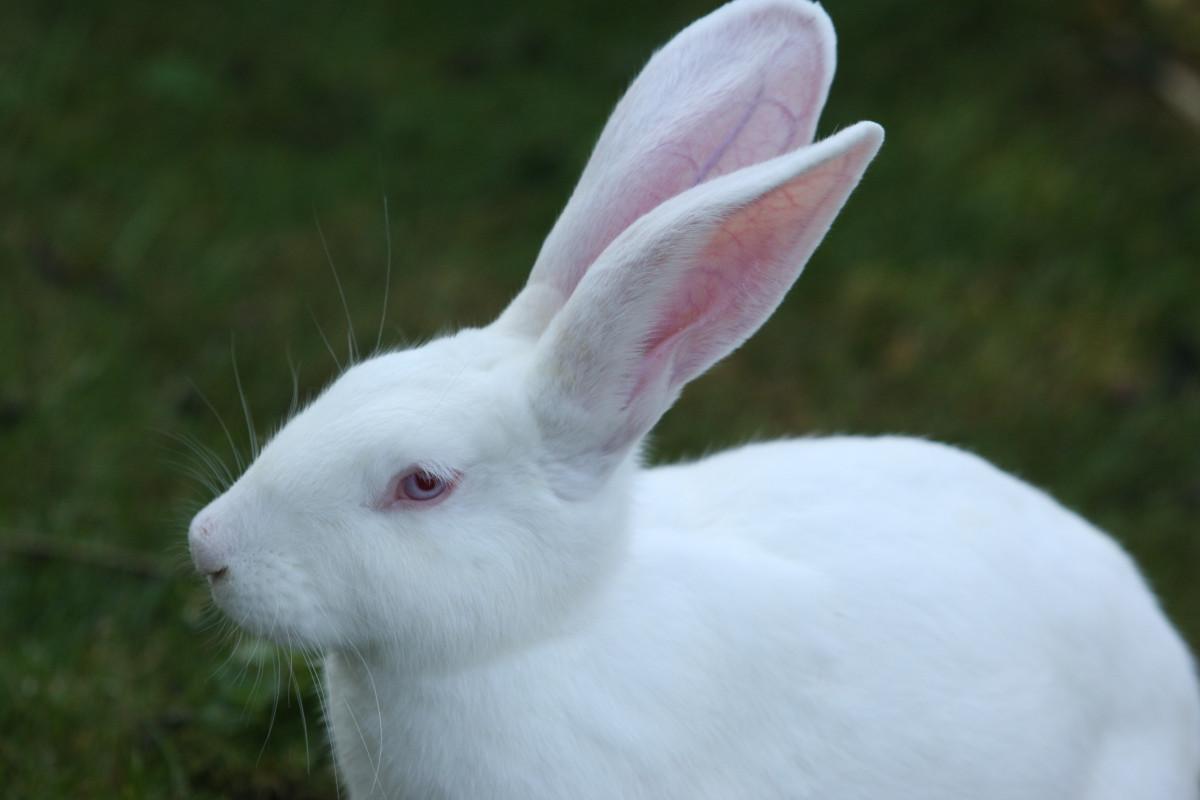 словам продавца картинки про уши зайцев зачем тратят