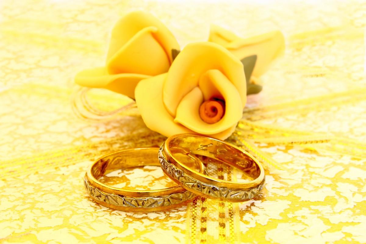 Золотая свадьба открытка онлайн, бурундуки лесу картинки