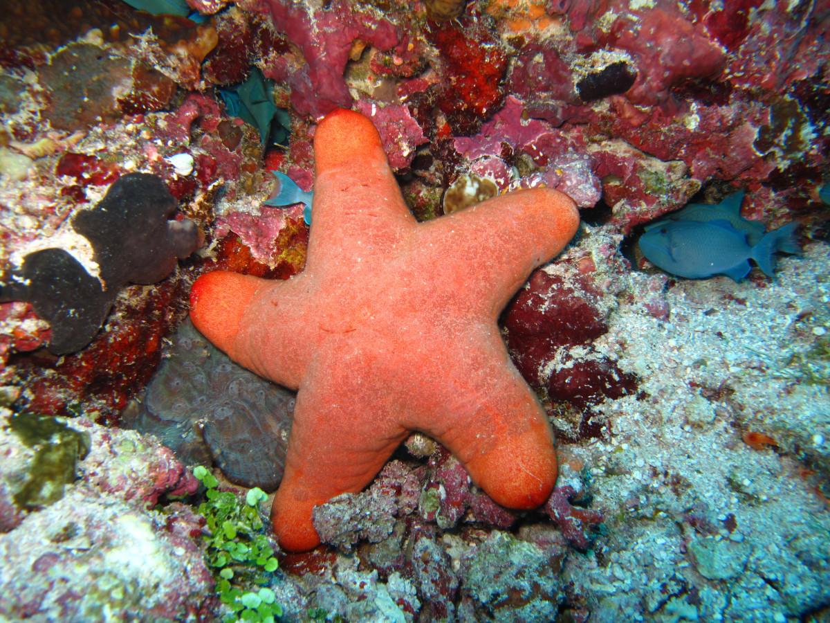 муж картинки морские звезды дельфины доработанная