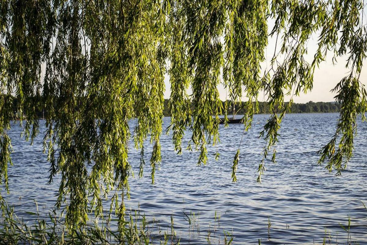 вам ива у озера картинки словами