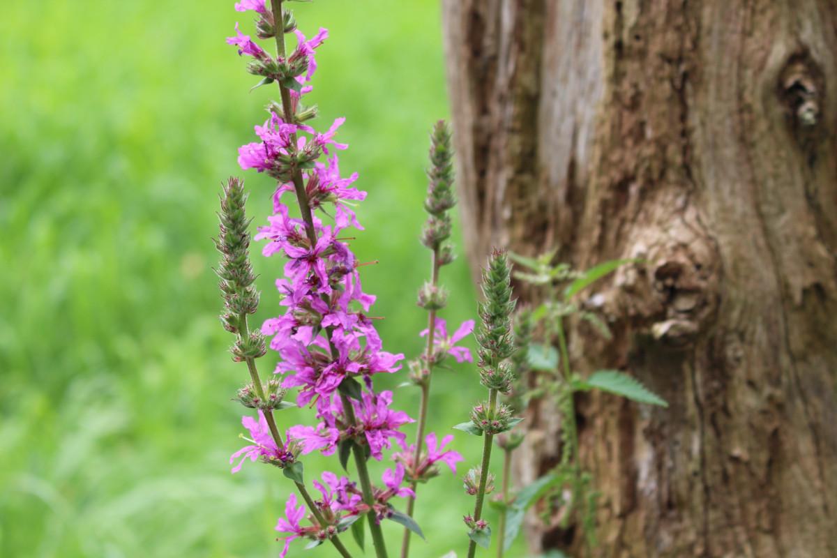 images gratuites la nature violet floraison jardin fermer flore orchid e orchid es. Black Bedroom Furniture Sets. Home Design Ideas