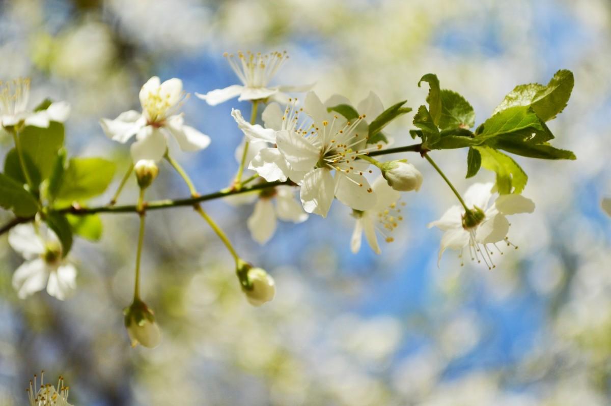 Красивая открытка природы солнце весна, горами