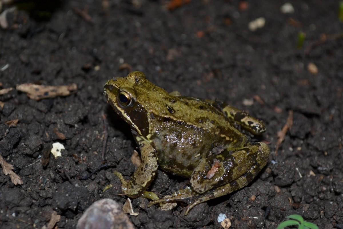 free images nature animal wildlife brown toad amphibian