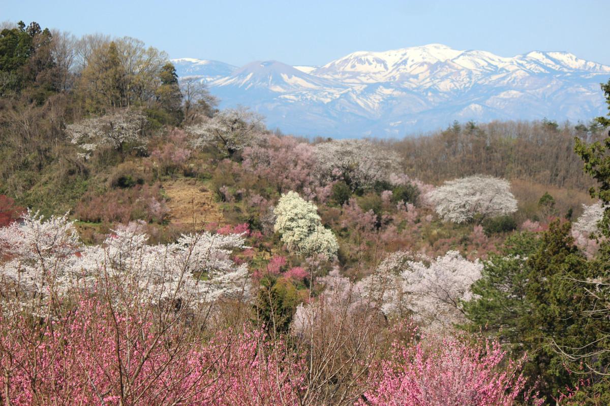 вишневые горы картинки