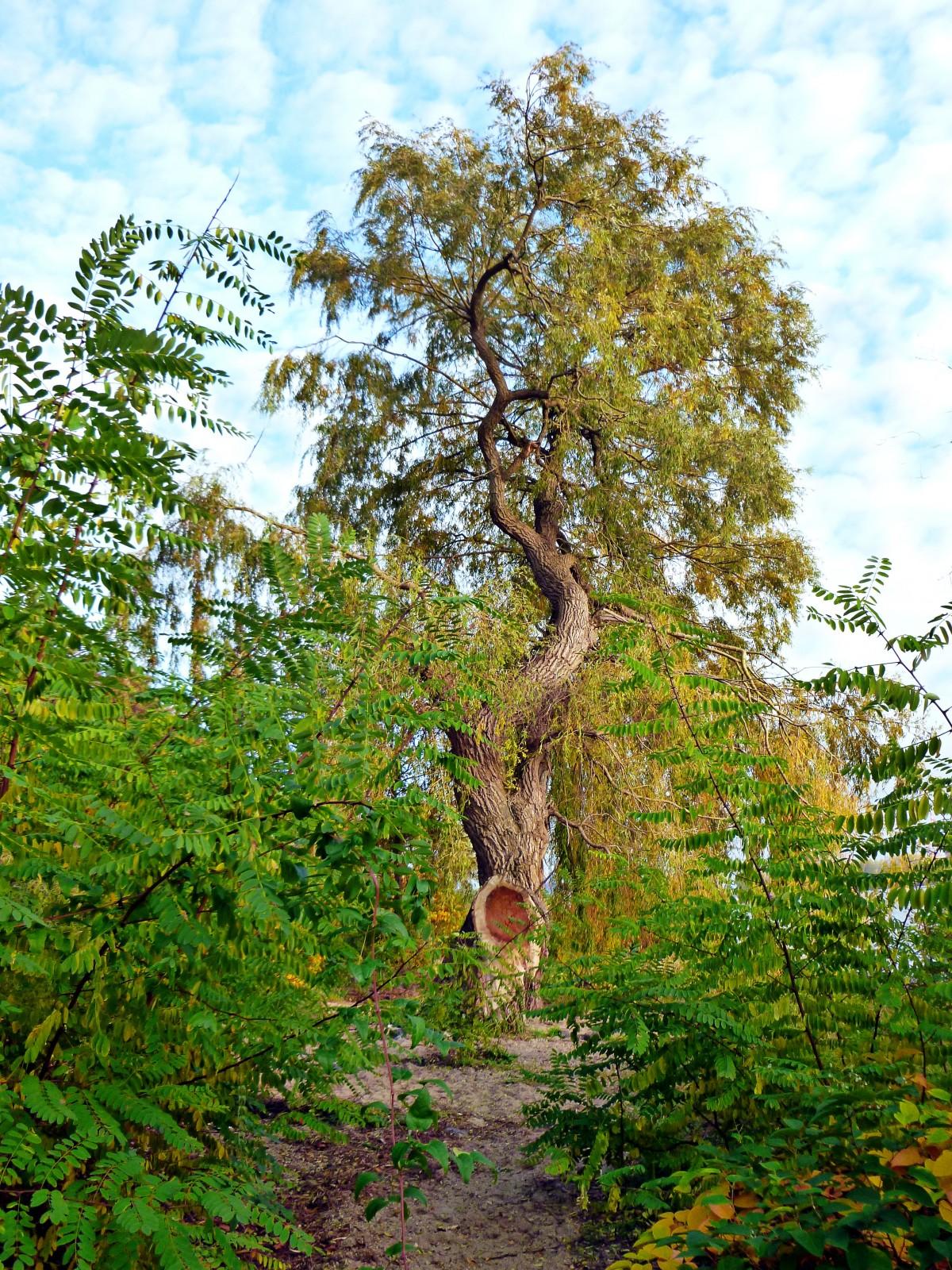 Fotos gratis paisaje rbol naturaleza bosque rama for Arboles altos para jardin