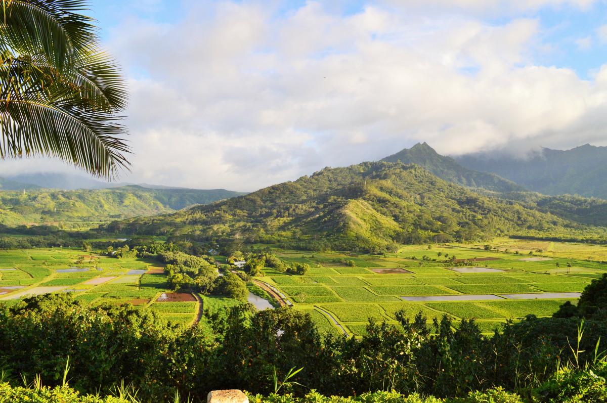 gambar pemandangan pohon gunung bidang padang rumput