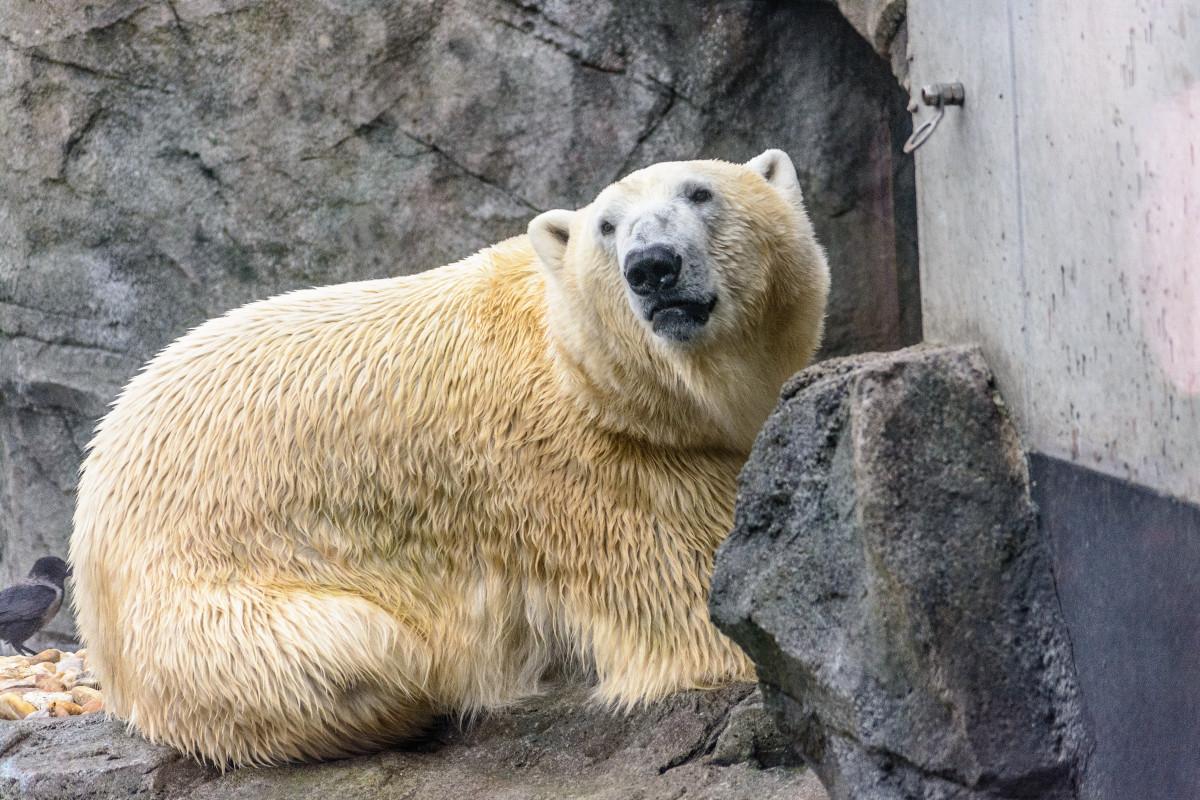 Polar Bear 42 D 25 Images Gratuite...