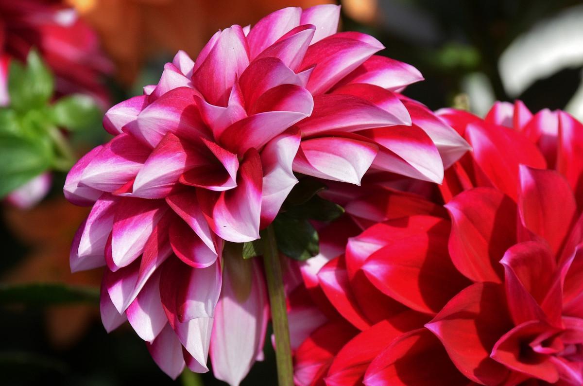Фото цветов цветущих в августе