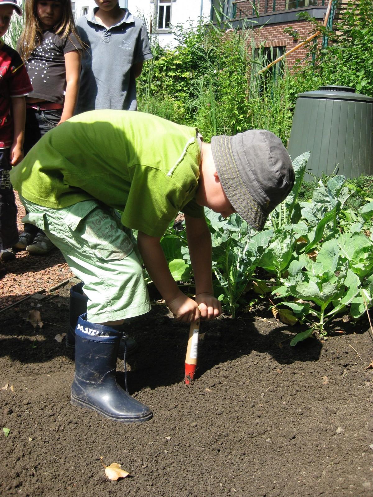 nature lawn asphalt green backyard soil garden children gardening plantation yard gardener
