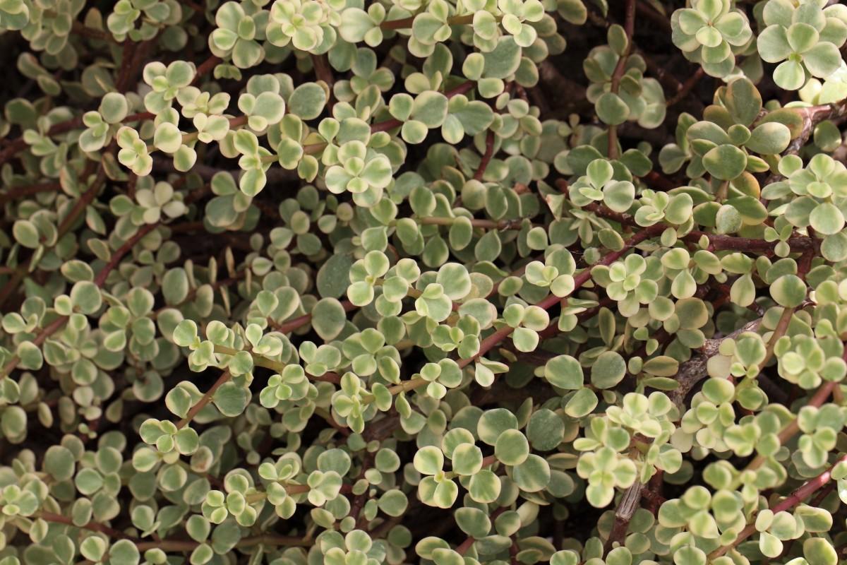 Images gratuites pelouse feuille fleur herbe for Couverture plante hiver