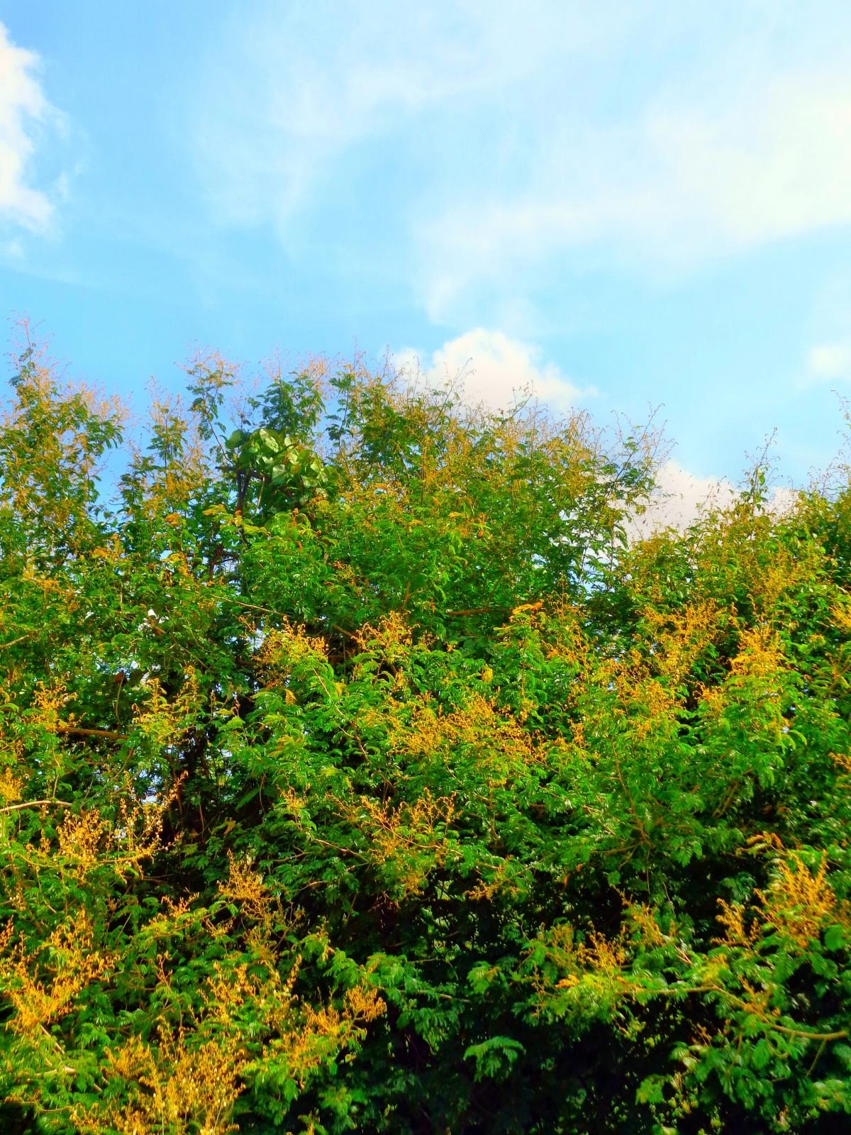 images gratuites arbre for t plante lumi re du soleil feuille fleur naturel l 39 automne. Black Bedroom Furniture Sets. Home Design Ideas