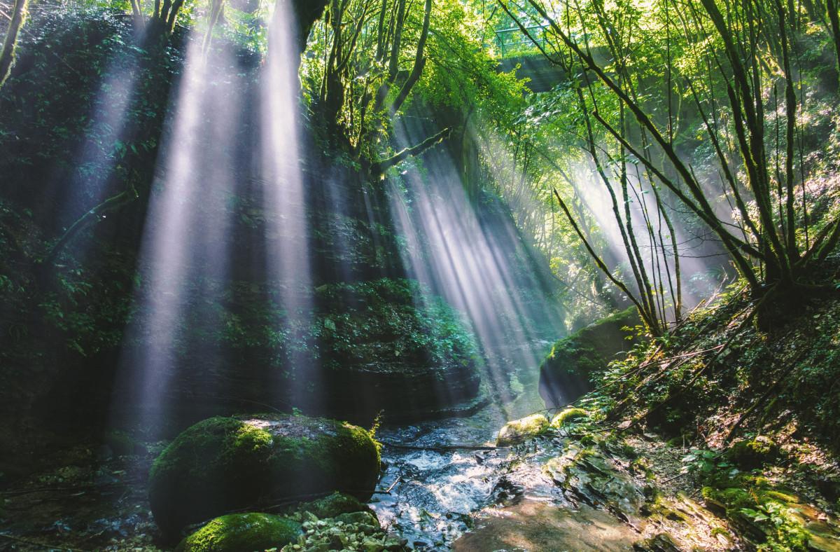 images gratuites eau la nature cascade rivi re courant jungle plan d 39 eau v g tation. Black Bedroom Furniture Sets. Home Design Ideas