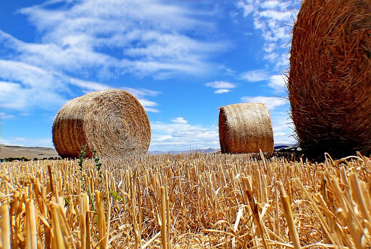 Бокс весенний, картинки для сельского хозяйства