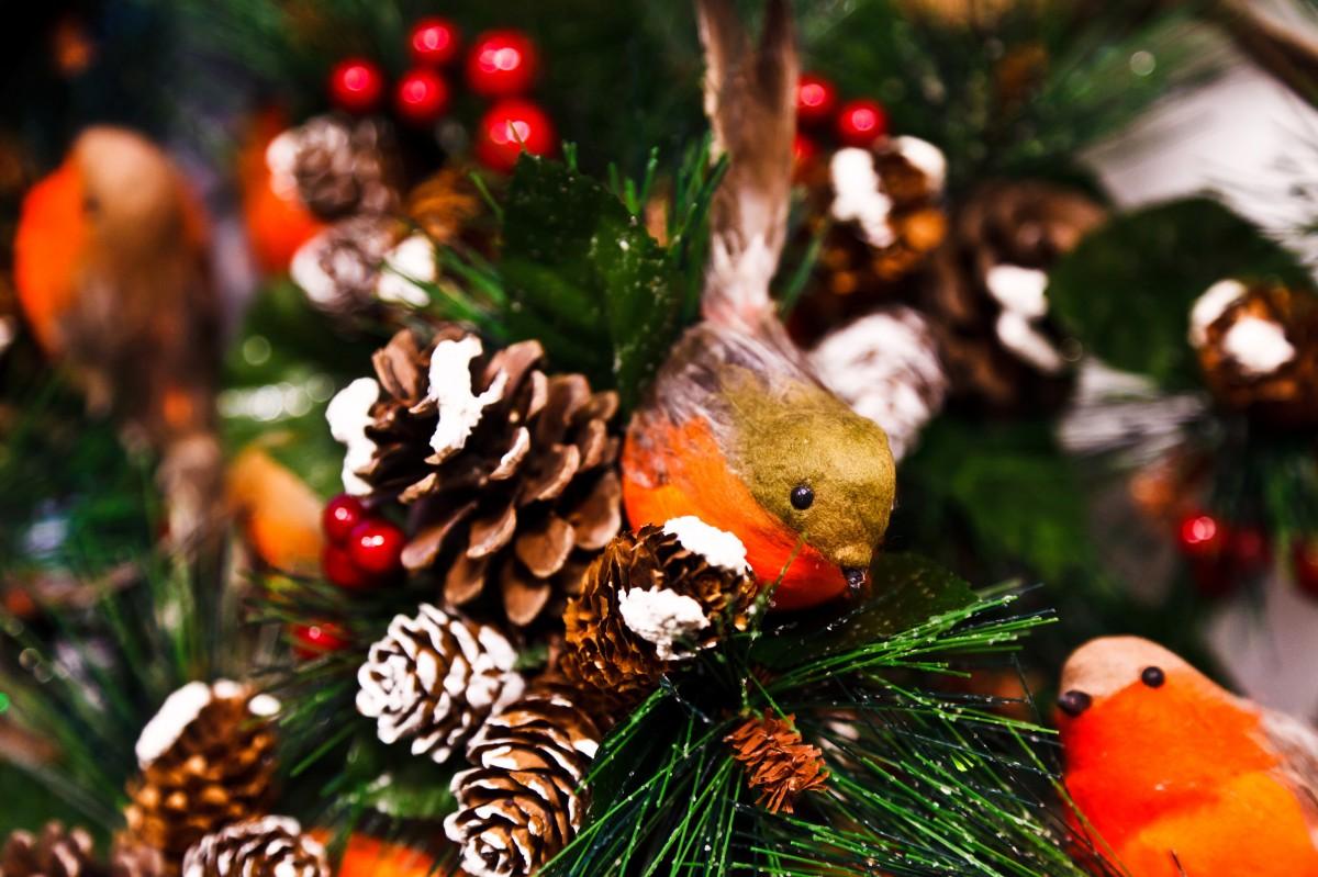 Images gratuites branche oiseau plante fleur animal f te plat insecte l 39 automne - Branche arbre decoration ...