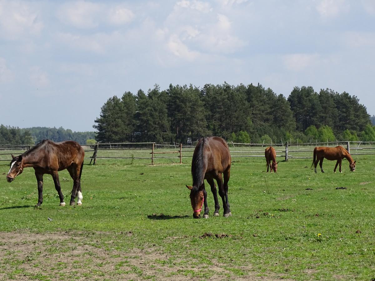 Free Images : grass, field, farm, meadow, prairie ...