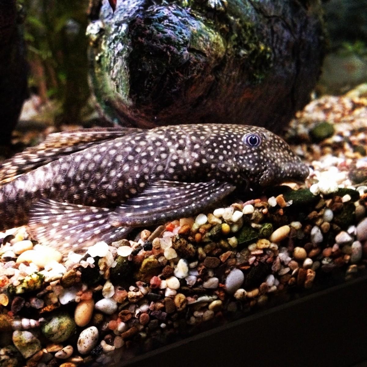 Free Images Wildlife Pet Fauna Snake Vertebrate Serpent