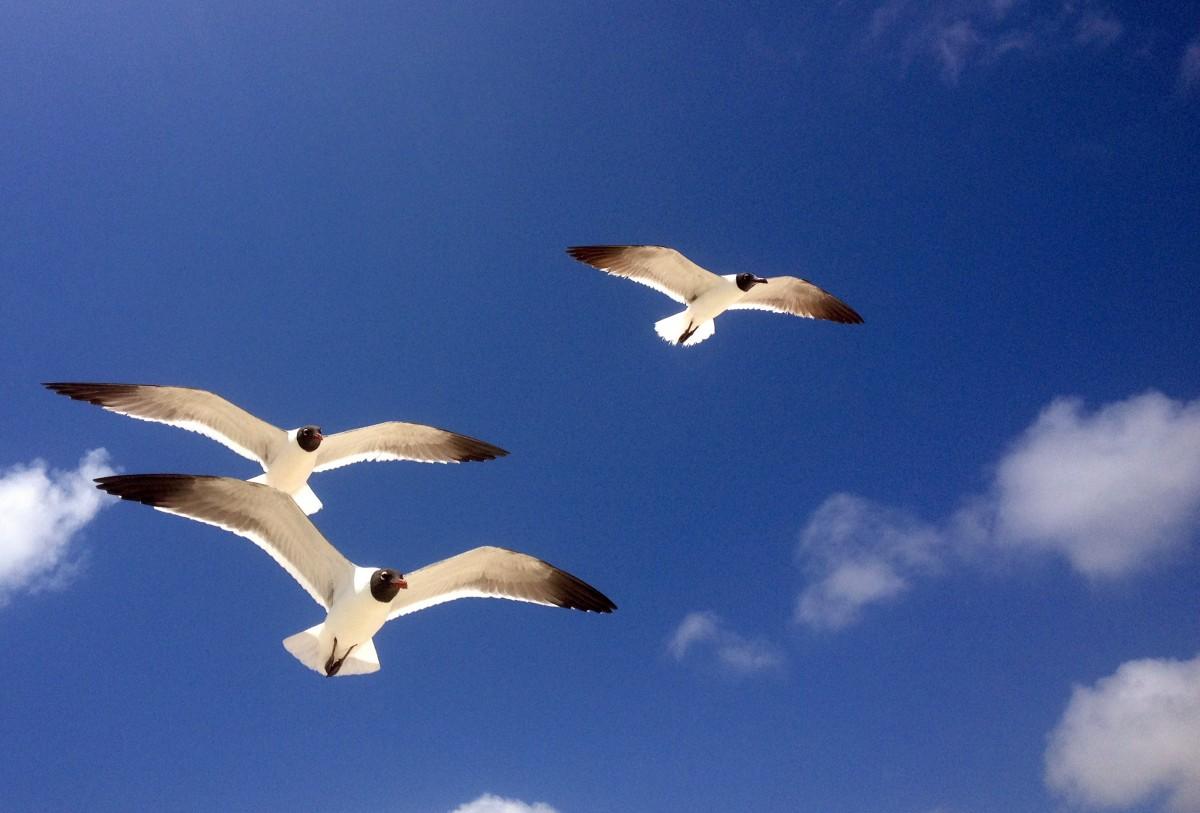beach, sea, nature, outdoor, ocean, bird