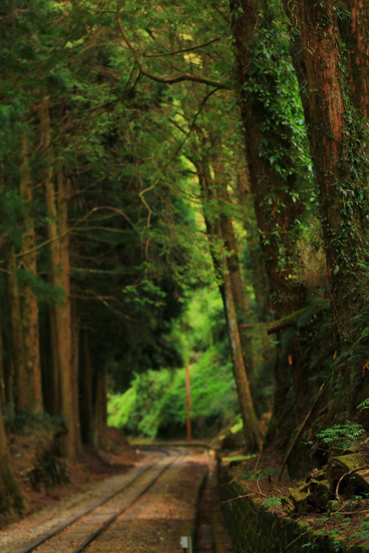 Free Images : tree, nature, railway, railroad, train track ... | 1200 x 1800 jpeg 406kB