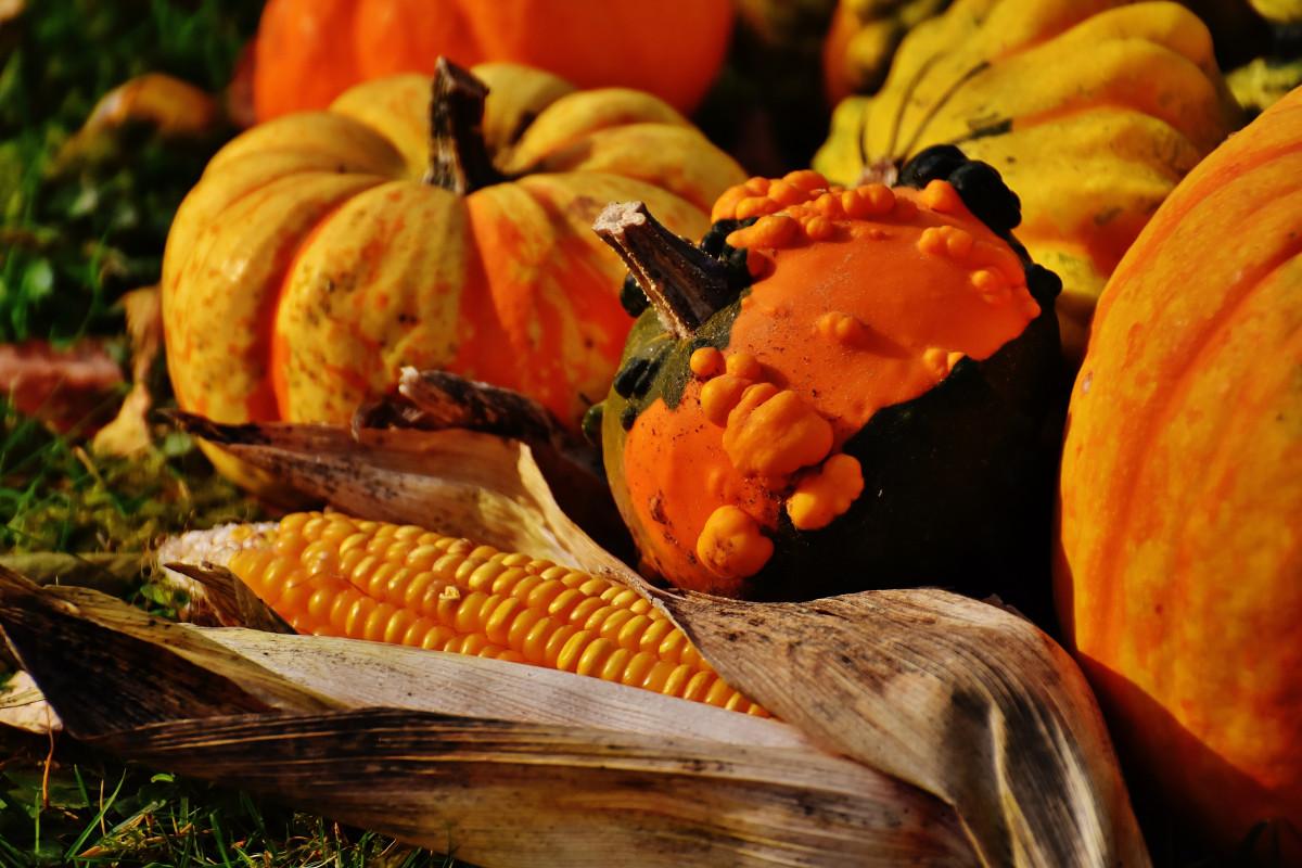 Free Images : flower, food, produce, halloween, season, charge ...