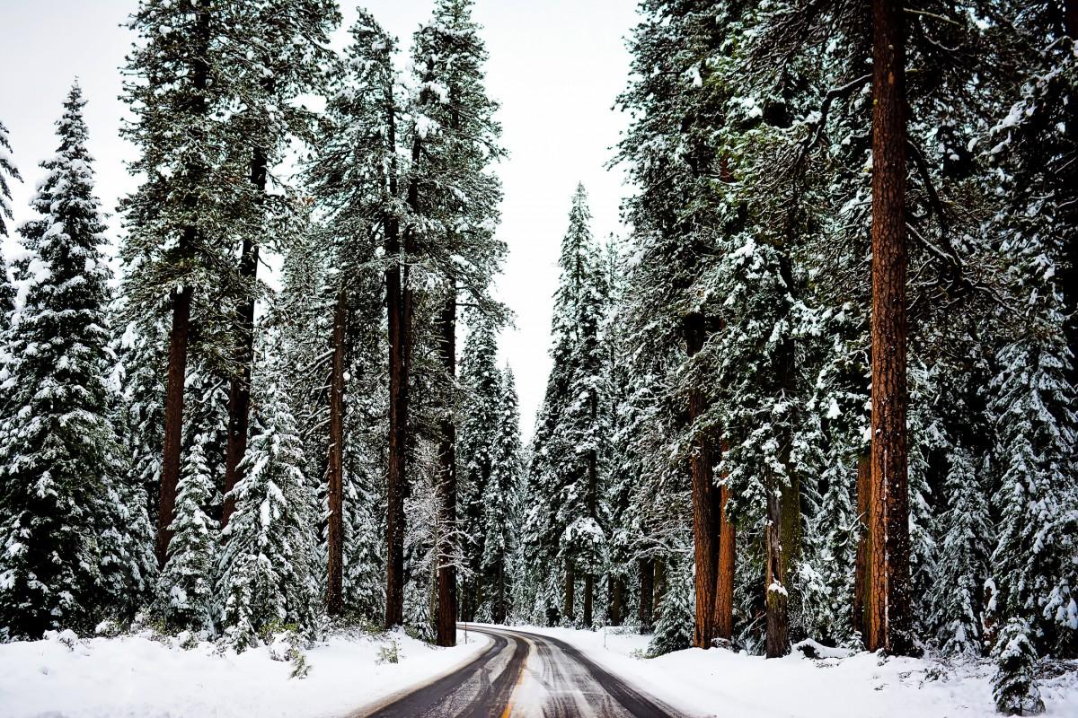 Black Snowing Christmas Tree