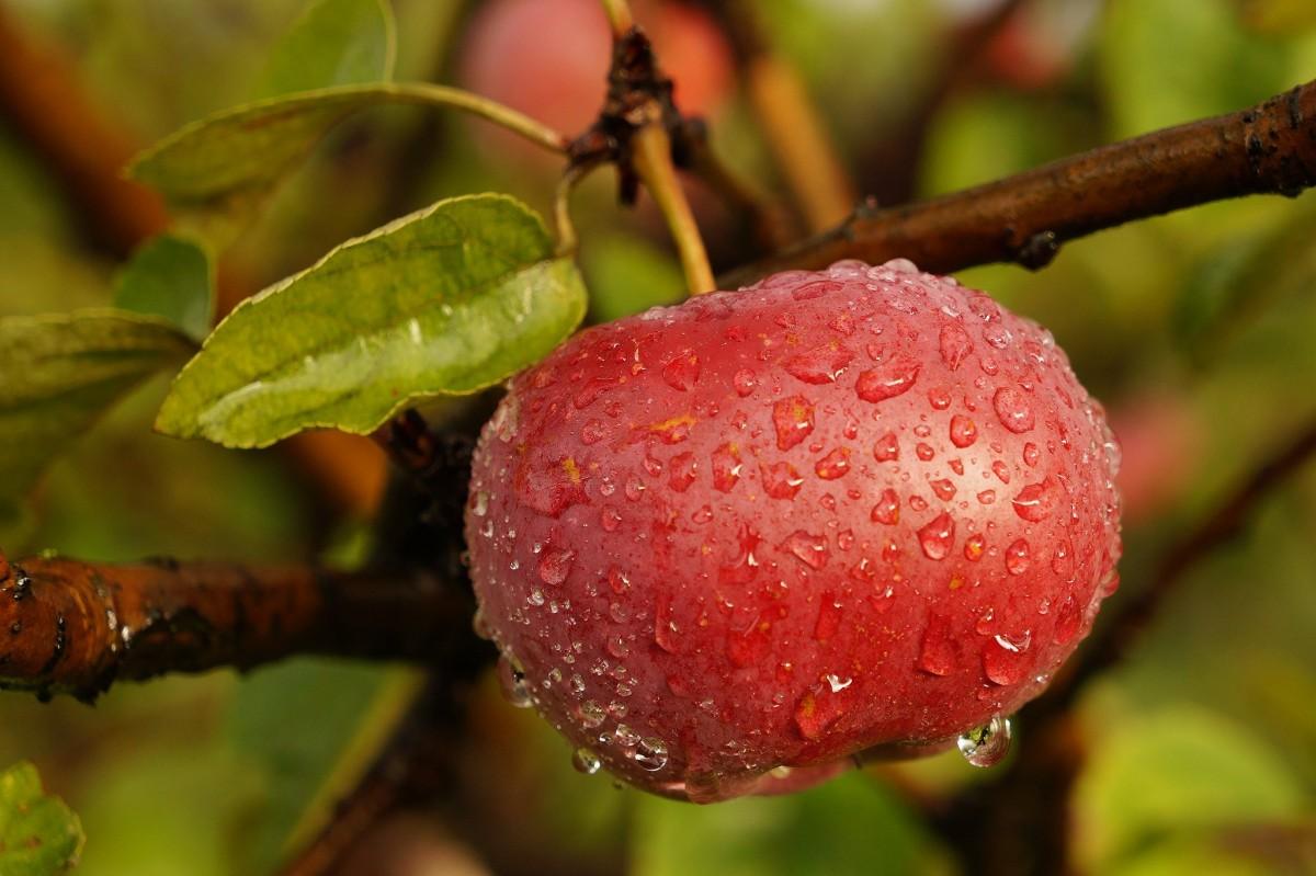 примеру, окна картинки деревьев с фруктами и ягодами времена него