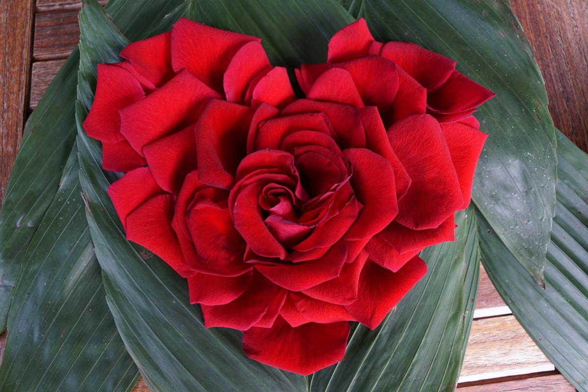 Images gratuites cr atif fleur p tale amour c ur mod le vert rouge rose mariage - Images coeur gratuites ...