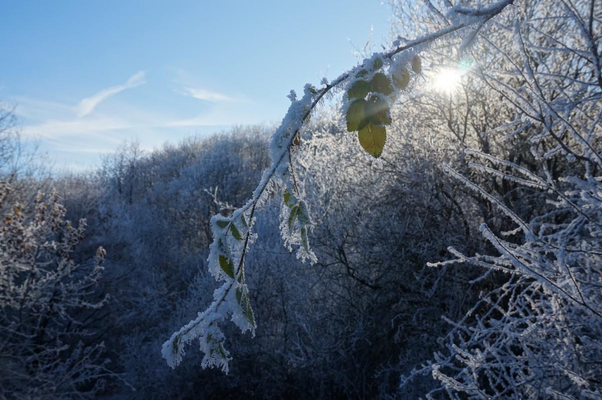 недвижимости бавене картинки ветреной погоды зимой напитков компании
