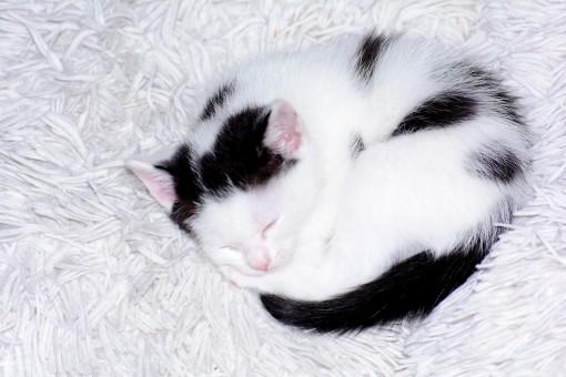 mladé čierne ženy mačička
