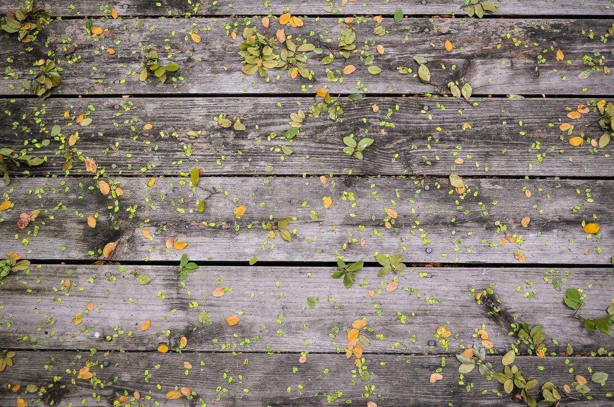 Green Gold Paint Wall