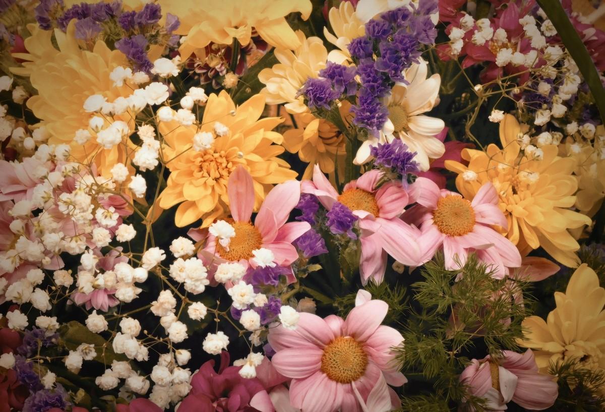 Fotos gratis flor dulce textura redondo p talo - Cortar hierba alta ...