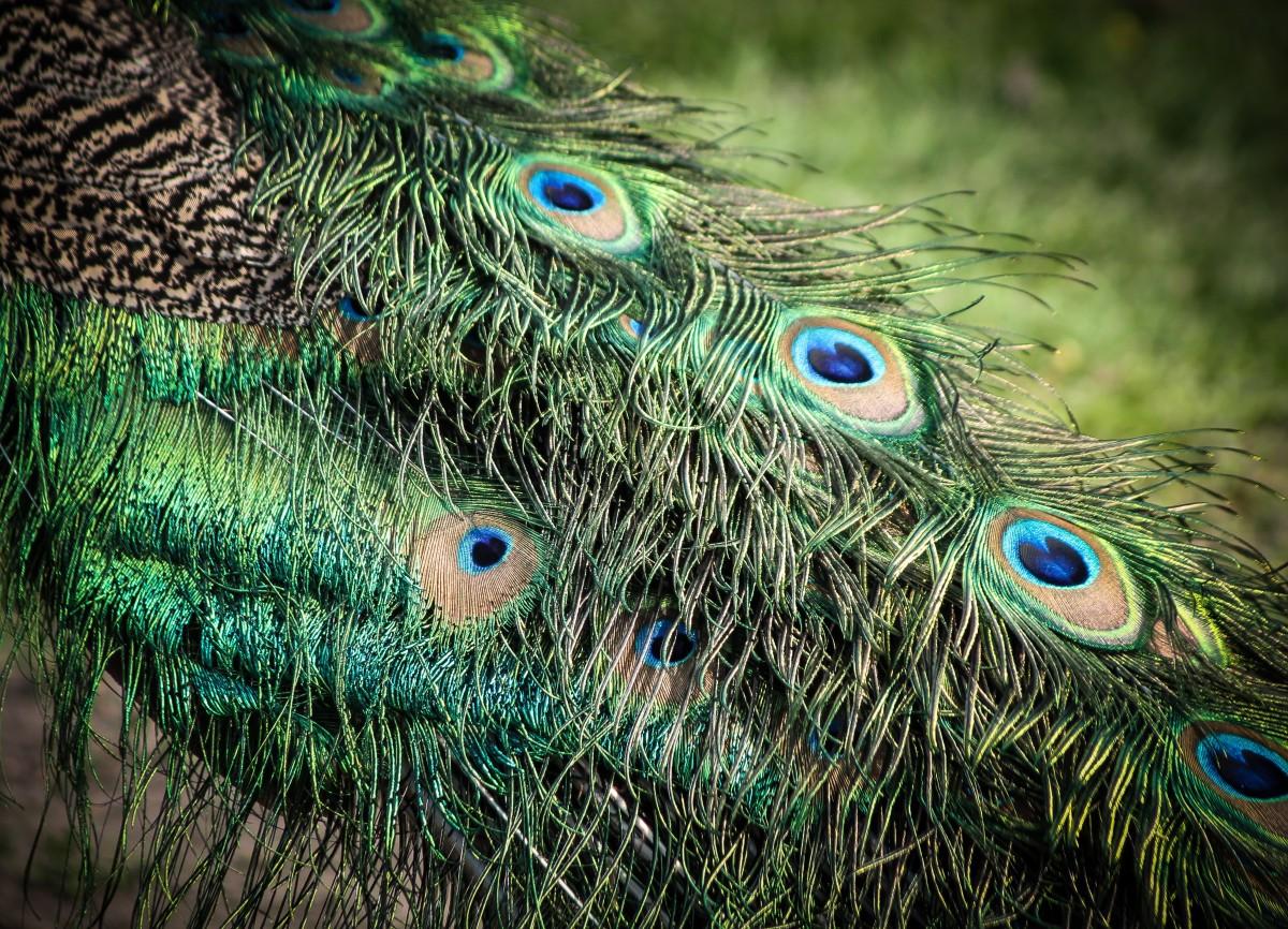 Images gratuites la nature oiseau aile feuille stylo for Oiseau par la couleur