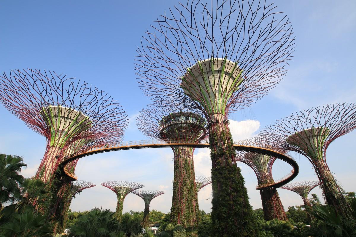 Free Images Tree Architecture Flower Amusement Park