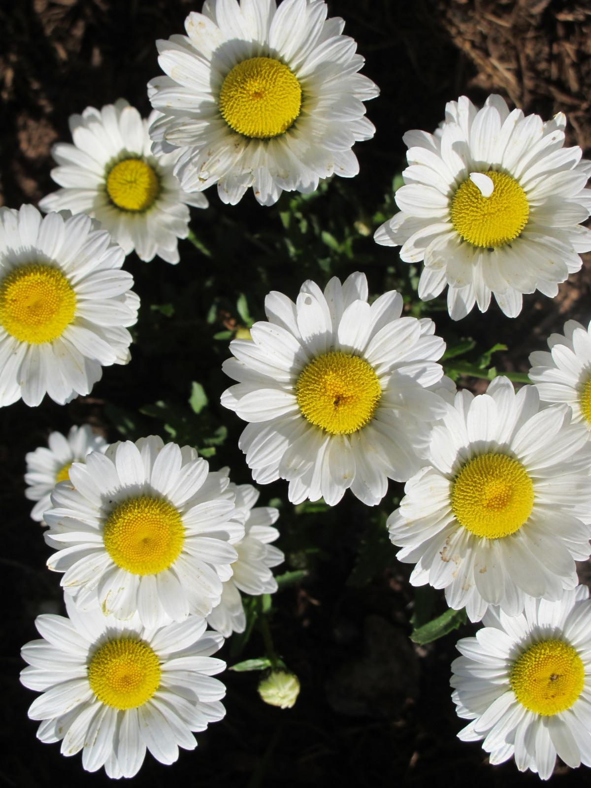 Free Images : nature, petal, bloom, colorful, flora ...