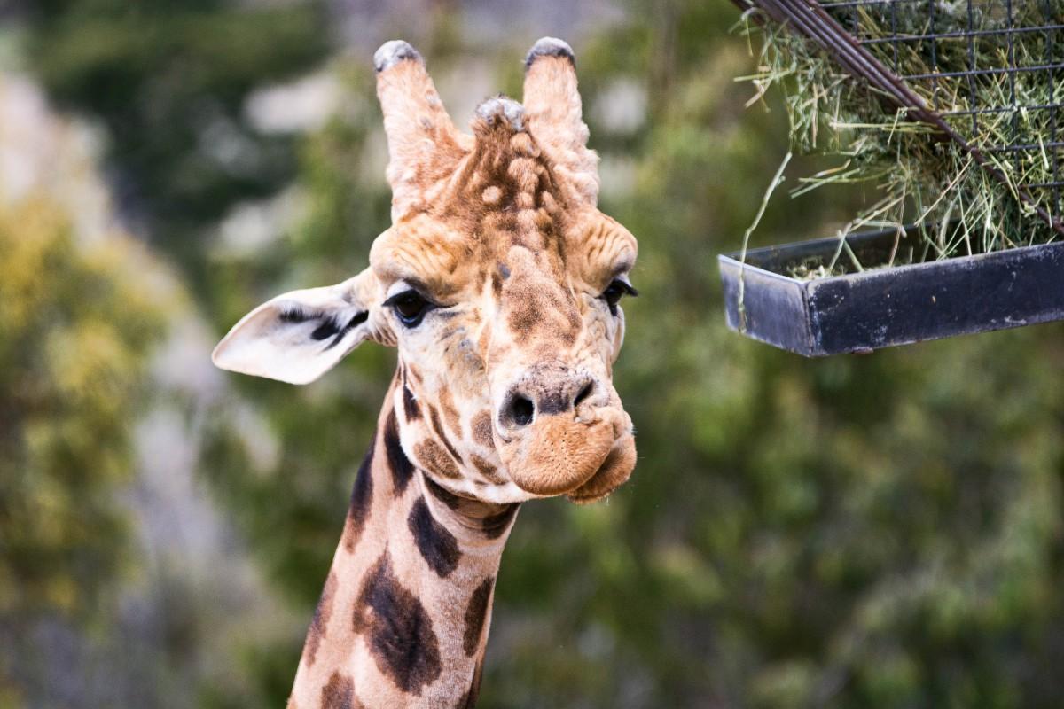Приколы про жирафов картинки, надписью как