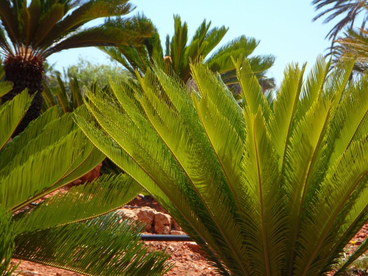 Fotos gratis rbol planta flor ventana casa viajar for Vegetacion ornamental