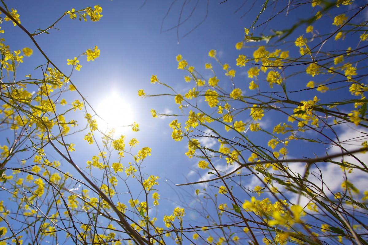 картинки красивое весеннее небо важная особенность открывающаяся