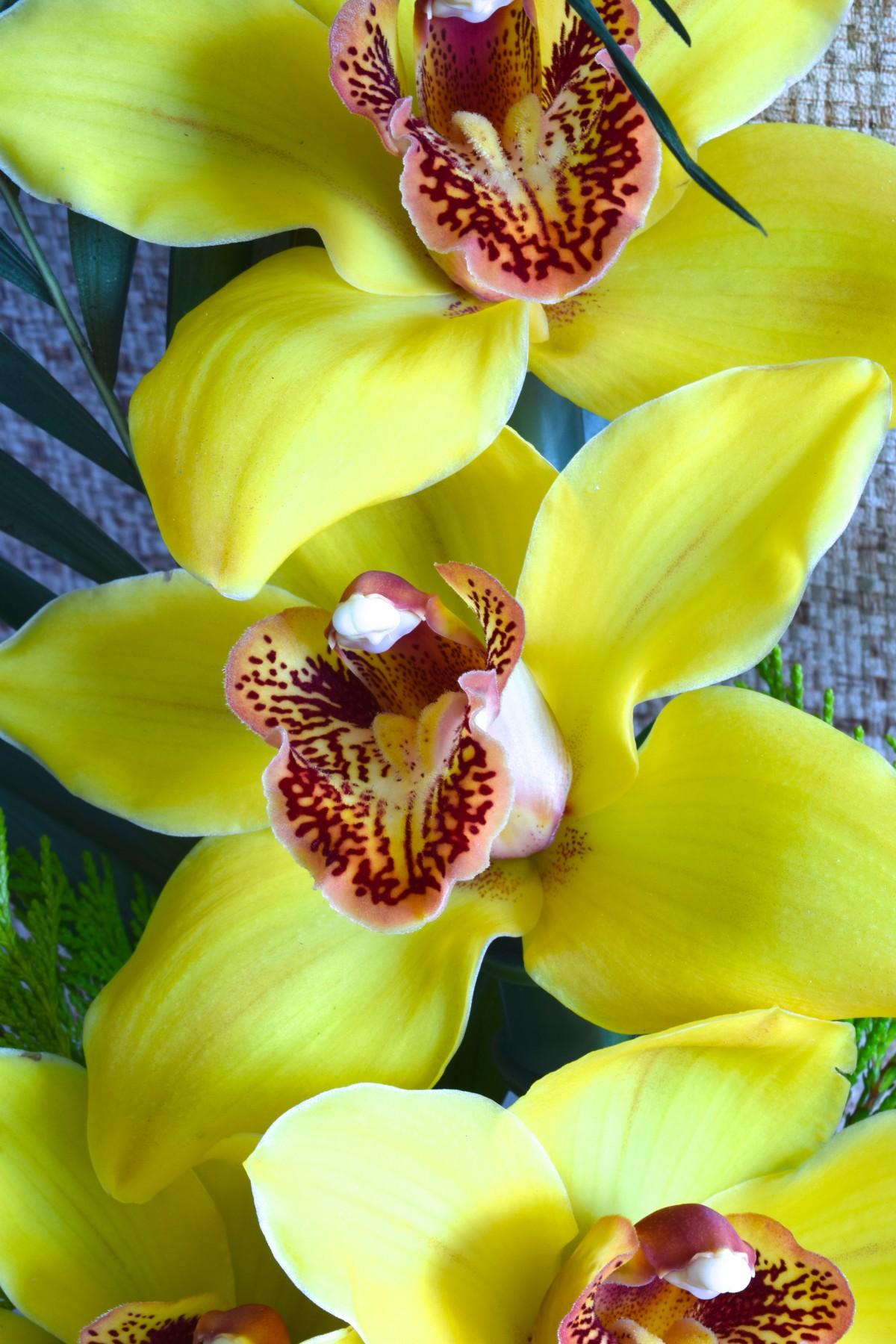 красивое фото желтых орхидей отличная