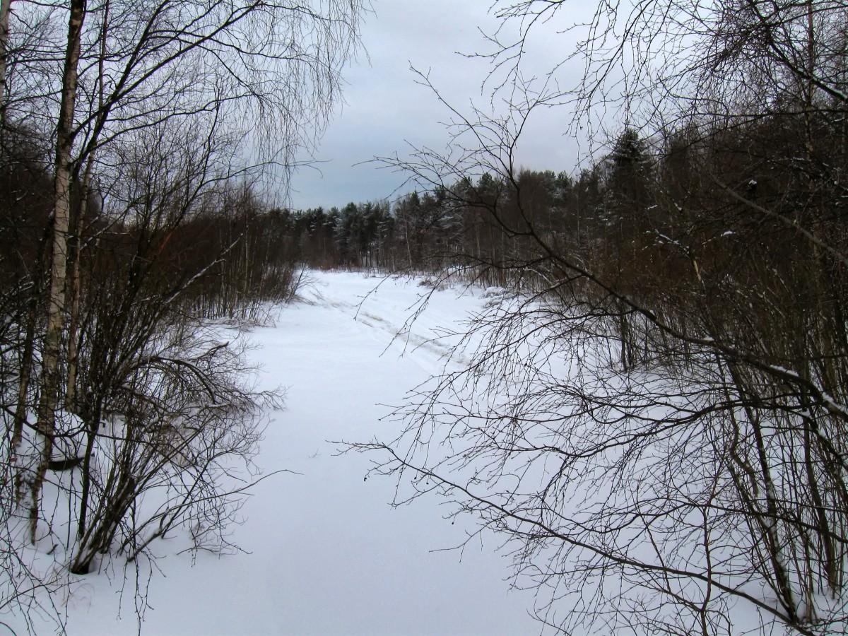 Free images landscape tree nature snow winter sky for Pond plants that survive winter