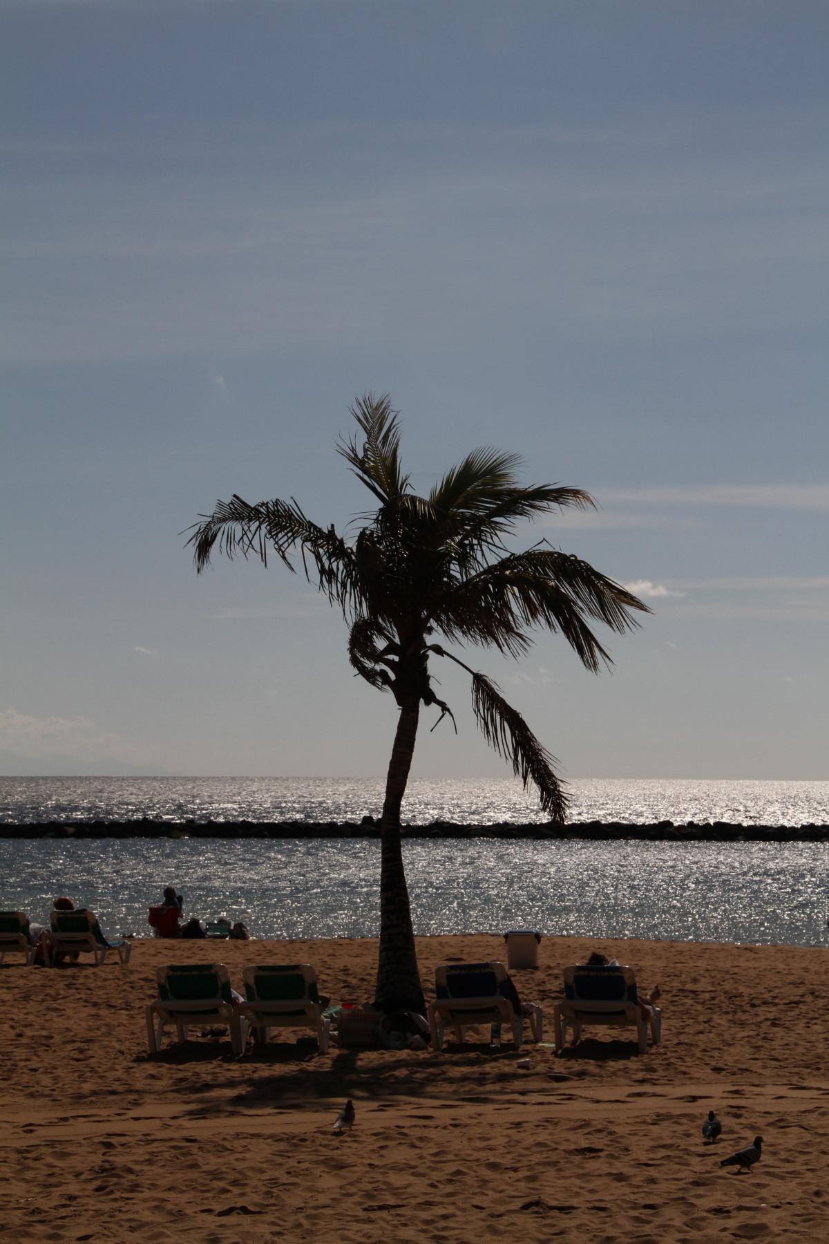 plage mer côte arbre le sable océan horizon plante ciel le coucher du soleil palmier rive vague vent crépuscule soir paume baie plan d'eau Tenerife Tropiques cap les îles Canaries Plante ligneuse Sont des échelles Famille de palmiers
