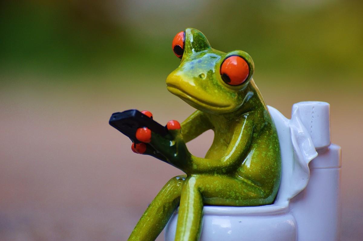 Картинки жаб смешные