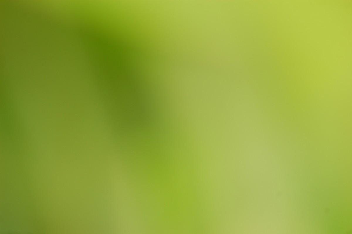 Free Images Nature Light Blur Plant Sunlight Leaf