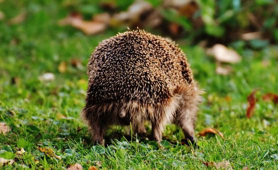 kostenlose foto  natur gras tier niedlich tierwelt