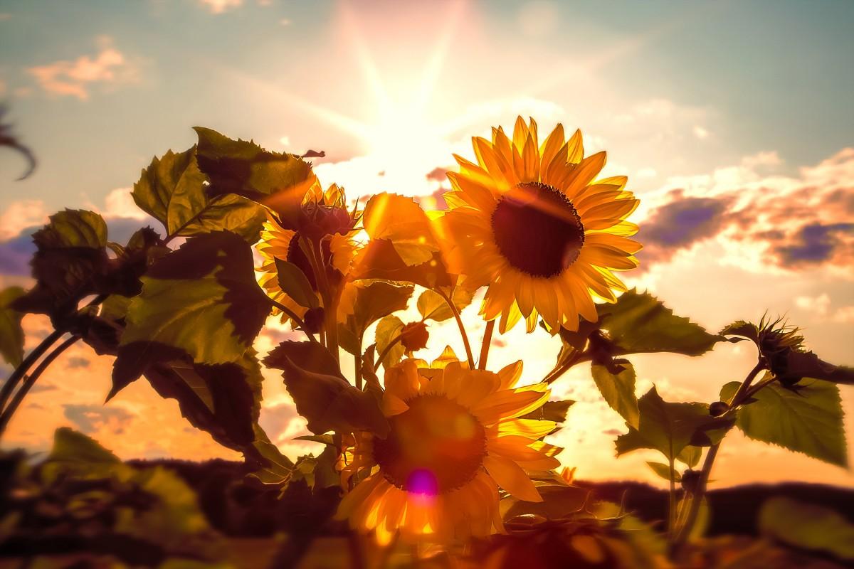Солнце фото открытки, картинки прикольные лес