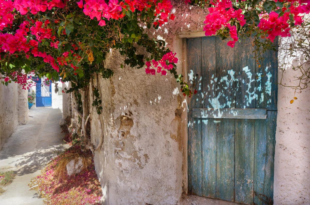 Images Gratuites 206 Le Grecque Rouge Fleurs