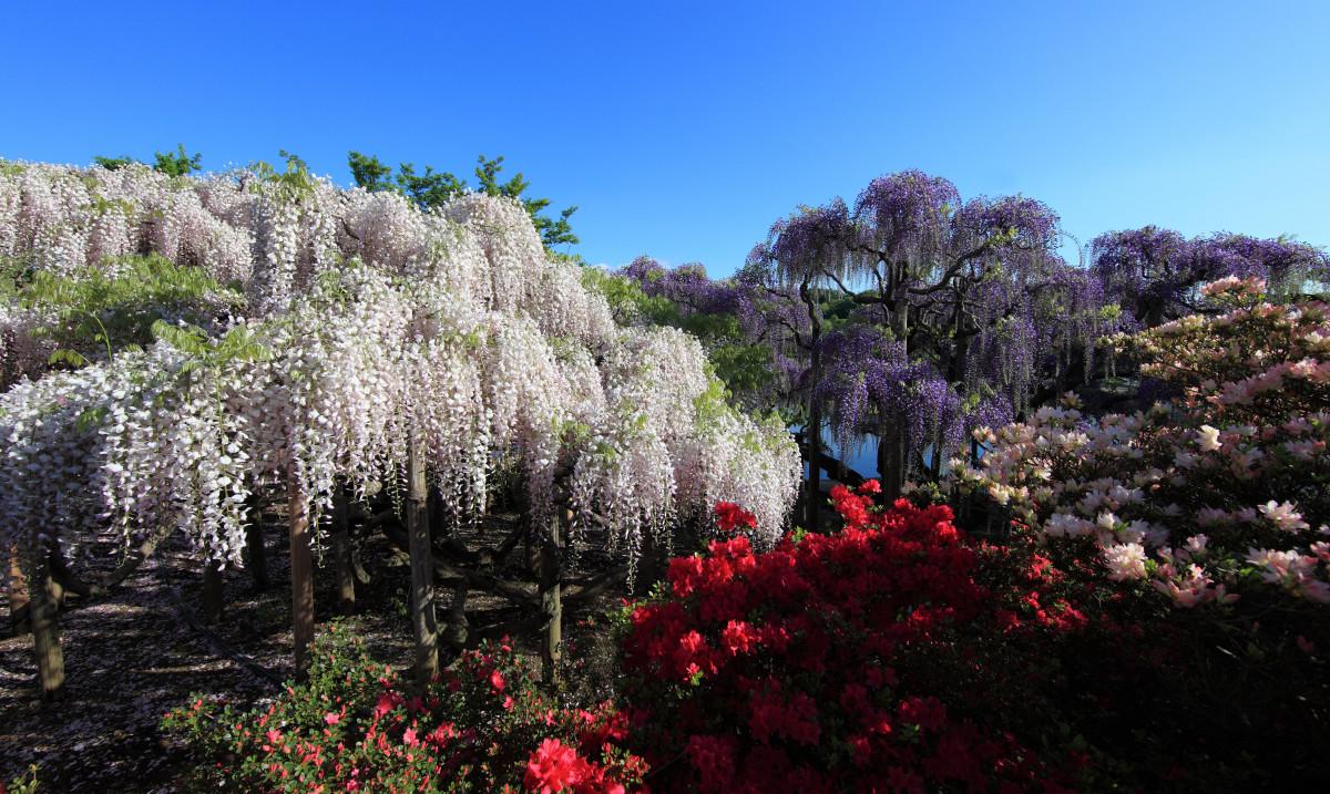 Толкуя, к чему снится цветущее дерево, большинство сонников рекомендует обратить внимание и на вид деревца, и на то, в какое время года оно цвело.