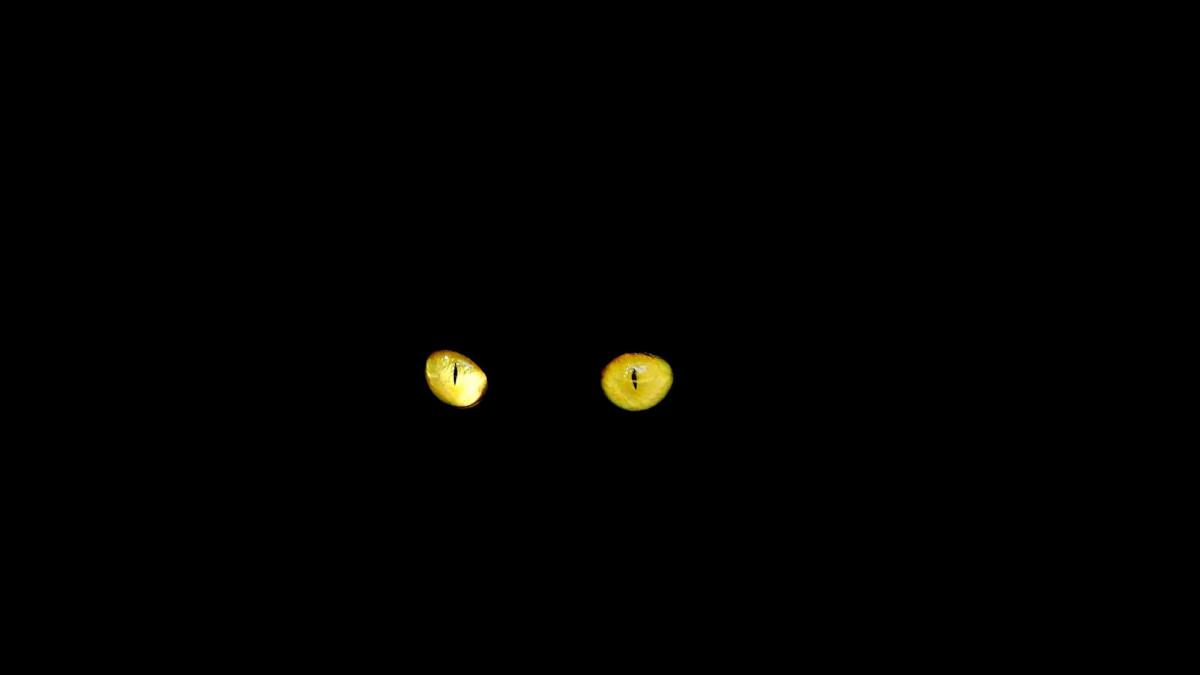 Darmowe Zdjęcia Czarny Kot Okrąg Zrzut Ekranu Kocie Oczy