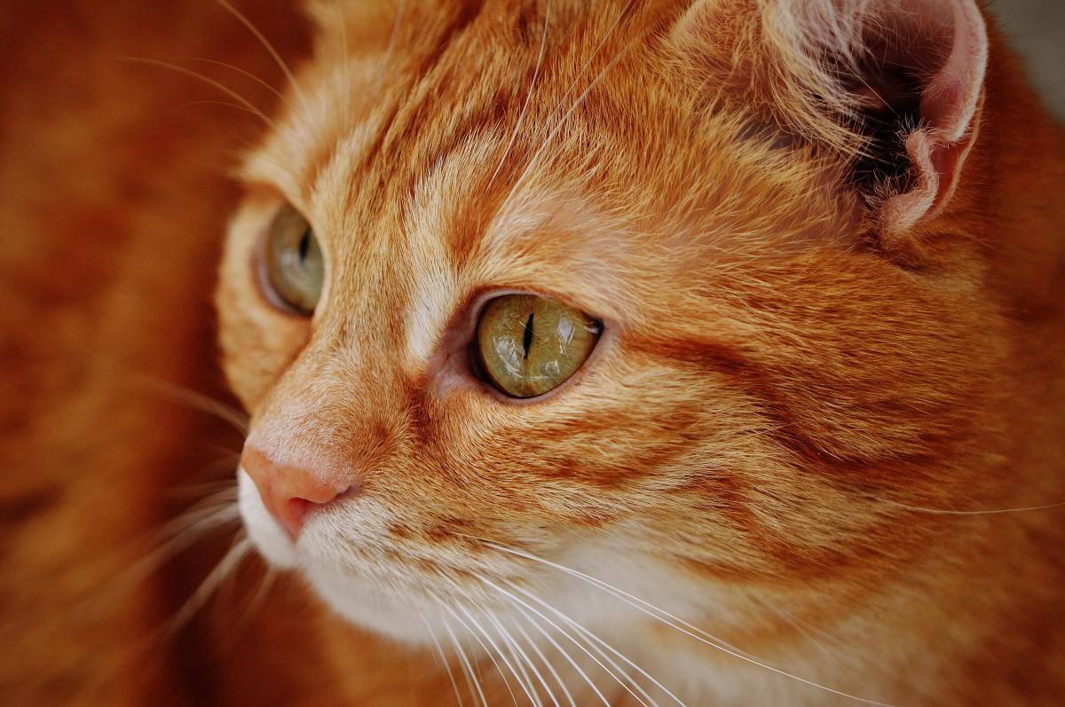 Gambar Manis Hewan Imut Membelai Bulu Anak Kucing