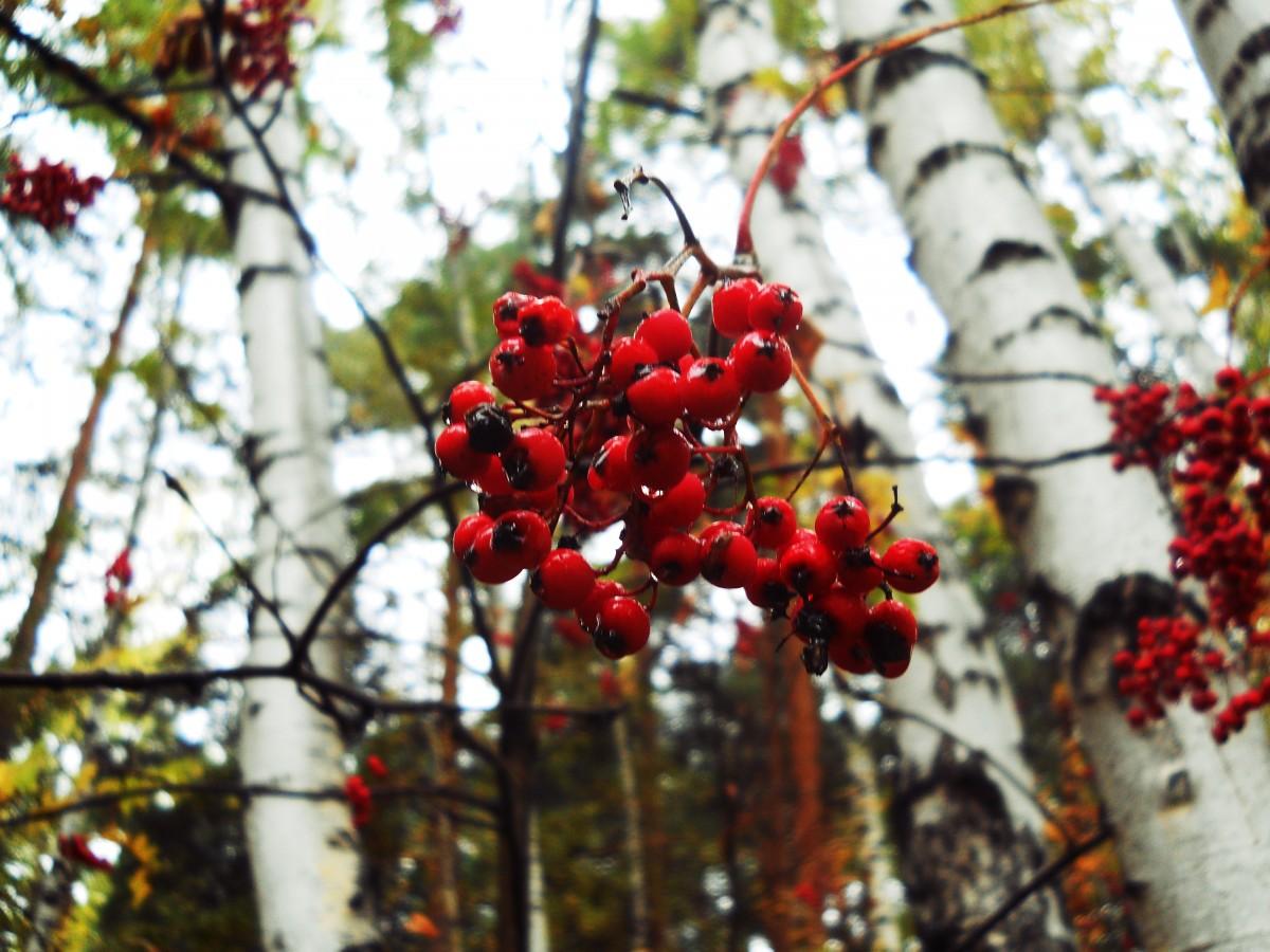 Images gratuites arbre branche fleur ciel fruit feuille printemps produire l 39 automne - Arbre fleurs rouges printemps ...